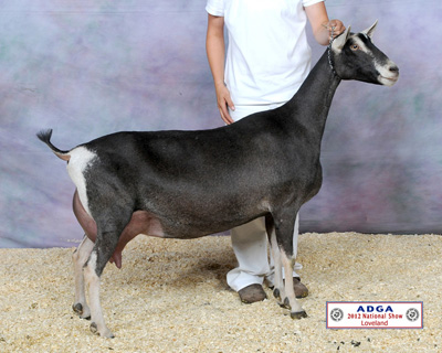 Maternal Grand-Dam: SGCH Redwood Hills X-Rated Rima 11*M