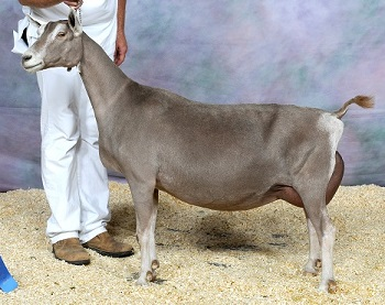 Dam: GCH Rowe's Redbud Secret Kiss